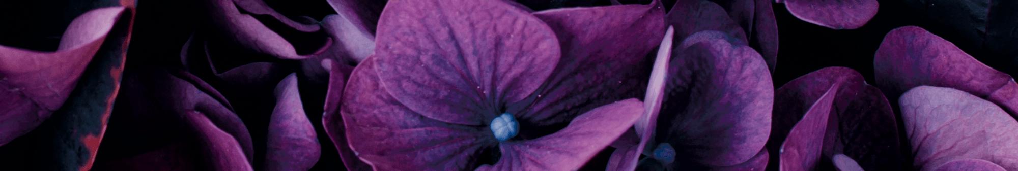 Smalt billede af lilla blomster - den smukke barsel